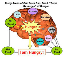 """Many Factors Influence """"Hunger"""""""